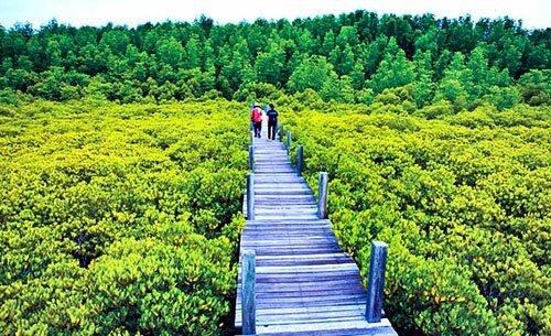 ทุ่งโปรงทอง-ปากน้ำประแส-ระยอง-ป่าชายเลน-ที่เที่ยว-มหัสจรรย์-pantip-ที่พัก-พิกัด-แผนที่-การเดินทาง-ตกปลา