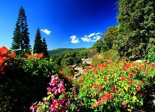 ดอกไม้เมืองเหนือ อุทยานแห่งชาติดอยสุเทพ-ดอยปุย