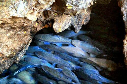 ปลาพลวง อุทยานแห่งชาติถ้ำปลา น้ำตกผาเสื่อ