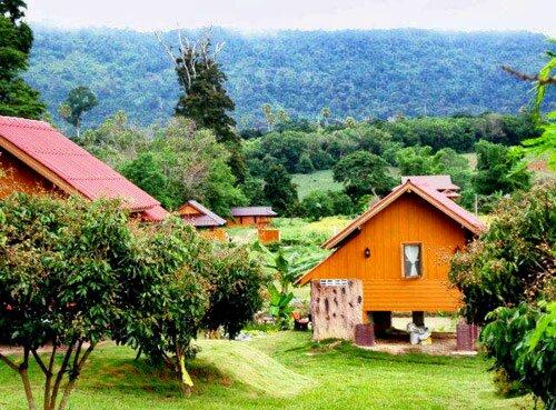 ธรรมชาติรอบๆ บ้านพัก ไร่ภูเคียงดาว ฟาร์มสเตย์ วังน้ำเขียว