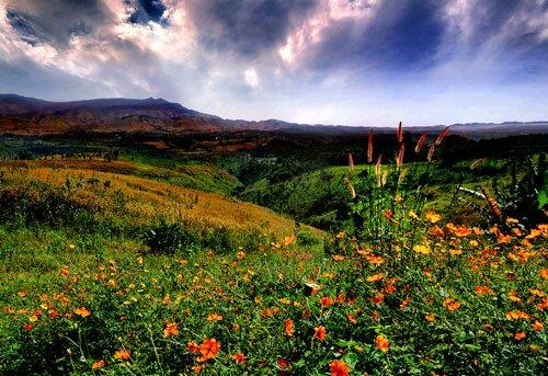 ดอกไม้ ป่าเขา อุทยานแห่งชาติเขาค้อ