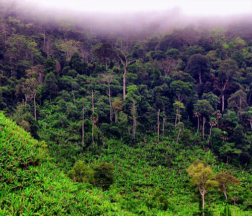 ป่าไม้ อุทยานแห่งชาติเขาค้อ