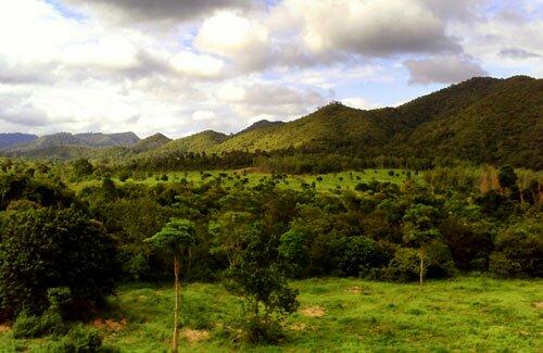 สภาพป่าไม้ อุทยานแห่งชาติกุยบุรี
