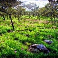 ทุ่งดอกกระเจียว อุทยานแห่งชาติป่าหินงาม
