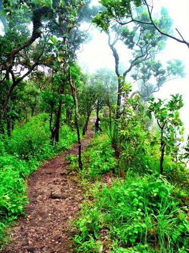 เส้นทางเดินศึกษาธรรมชาติ อุทยานแห่งชาติไทรทอง