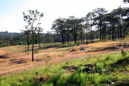 สภาพป่า อุทยานแห่งชาติผาแต้ม