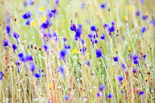 ดอกไม้บนลานหิน อุทยานแห่งชาติผาแต้ม