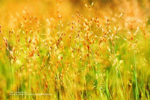 ดอกไม้บนลานหิน อุทยานแห่งชาติภูจองนายอย