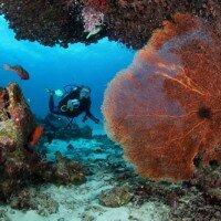 ดำน้ำ อุทยานแห่งชาติหมู่เกาะสิมิลัน พังงา