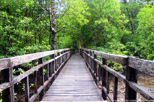 สะพานไม้ อุทยานแห่งชาติตะรุเตา สตูล
