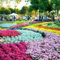 เทศกาลเชียงรายดอกไม้งาม จังหวัดเชียงราย
